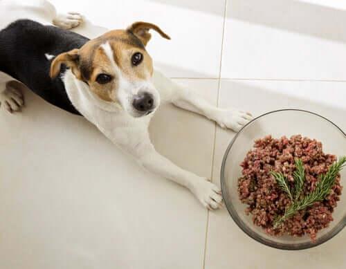 Sind Hunde Fleischfresser? Alles Wissenswerte!