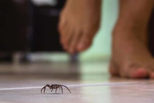 Spinnengift und ihre Wirkung