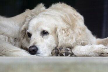 Die häufigsten Ursachen für eine Lungenentzündung bei Haustieren