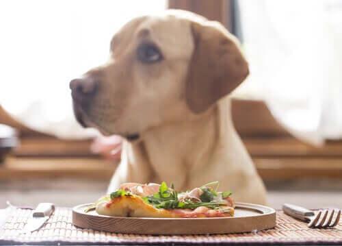Vegane Ernährung für Hunde: Ist das gesund?