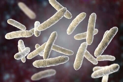 Lungenentzündung - Bakterien