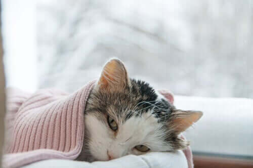 Lungenentzündung - Katze