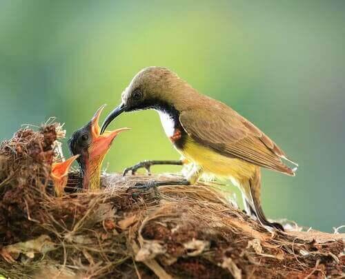 Elterliche Fürsorge - Vögel im Nest
