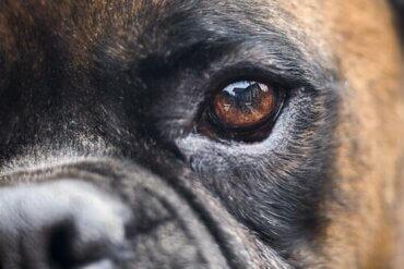 Blindheit bei Hunden: Früherkennung und Behandlung