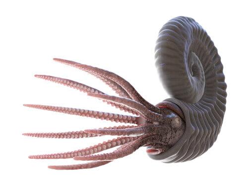 Die faszinierende Welt der Ammoniten