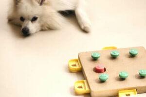 Spiele für Hunde, bei denen sie denken müssen