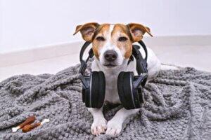 Ein eingeschaltetes Radio wird die Trennungsangst bei Hunden nicht beheben