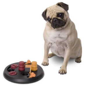 Spiele für Hunde, die ihr Gehirn stimulieren