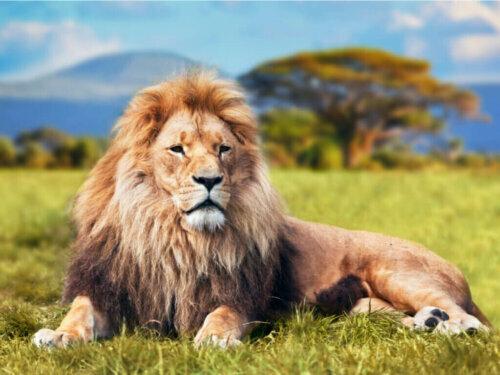 AAP Primadomus: Europas größtes Tierschutzzentrum für Großkatzen
