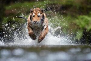 Die AAP-Stiftung: Rettungszentren für exotische Tiere
