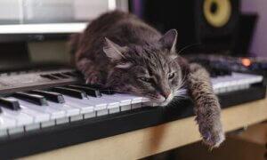 Hintergrundgeräusche sind für Katzen eher weniger zu empfehlen