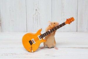 Ob Tiere Musik oder Geräusch mögen, hängt von ihrem Charakter ab