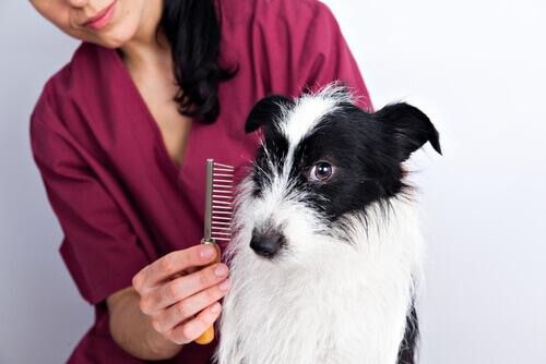 Fellpflege bei Hunden – Wichtige und praktische Tipps