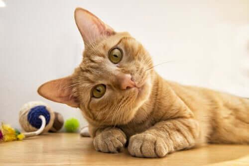 Intelligenz von Katzen