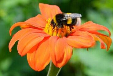 Bestäubung von Pflanzen durch Tiere - eine uralte Symbiose