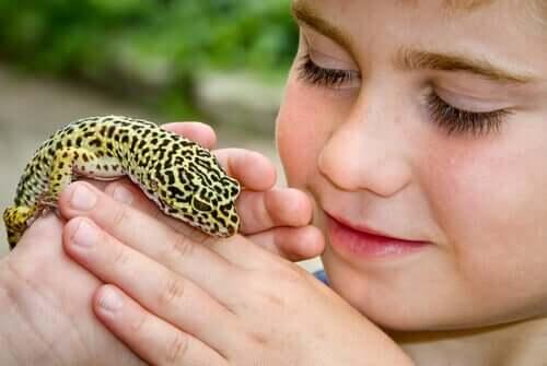 Der Gemeine Leopardgecko - ein ideales Haustier