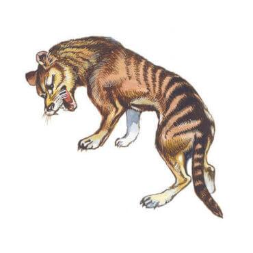 Der Tasmanische Tiger: Merkmale und Eigenschaften