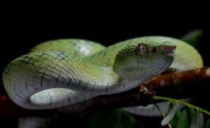 Die tödlichsten Tiere der Welt: Kennst du sie?