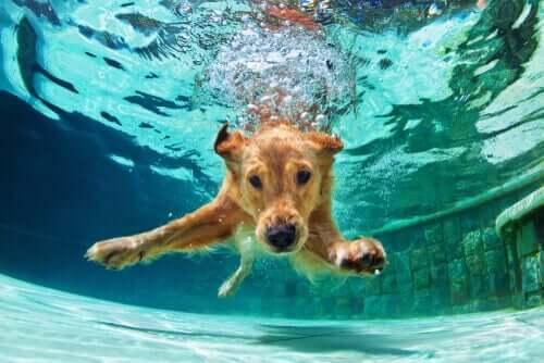 Schwimmen für Hunde: Alles Wissenswerte