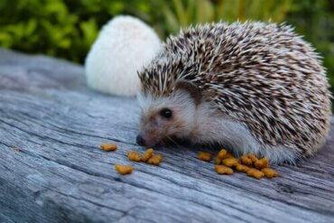 Das Wobbly Hedgehog Syndrom (WHS): Was ist das?