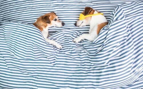 Warum kratzen die meisten Hunde an ihrem Bett?