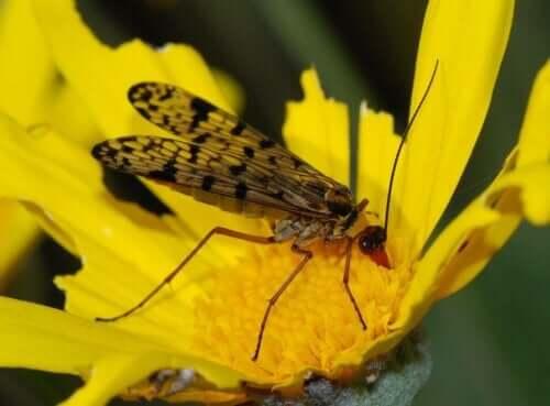 Bestäubung - Insekt auf Blüte