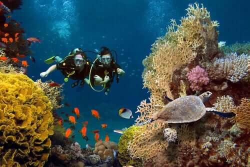 Korallenriffe - 2 Taucher