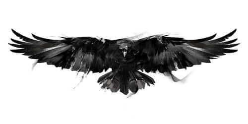 Schriftsteller - Zeichnung einer Krähe