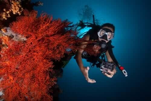 Korallenriffe - Taucher an Koralle