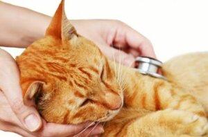 AIDS bei Katzen - Untersuchung