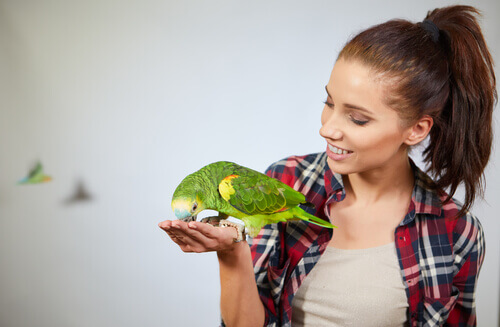 Die überraschenden kognitiven Fähigkeiten von Papageien