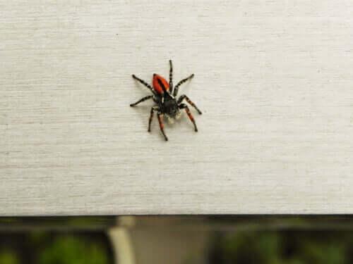 Angst vor Spinnen: Wie du Arachnophobie überwinden kannst