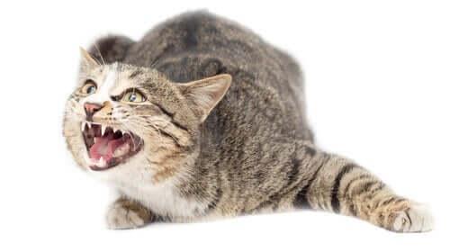 Angststörungen: Können auch Katzen darunter leiden?