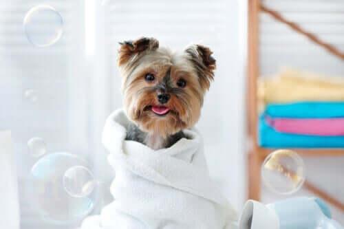 Wie du Feuchttücher zur Reinigung deines Haustieres verwenden kannst