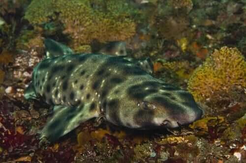 Im Dunkeln leuchtende Haie - entdecke ihr Geheimnis!