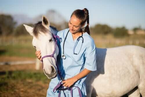 Krätze bei Pferden: Pflege und Behandlung