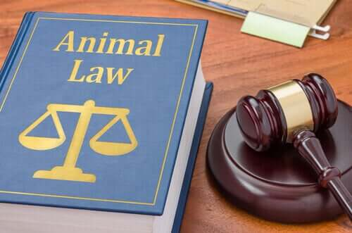 Warum könnte ein Haustier einen Tieranwalt benötigen?