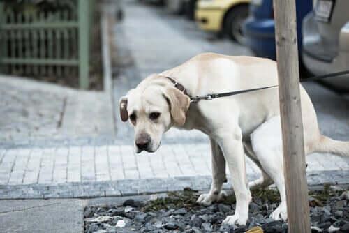 Verdauungsbeschwerden bei Hunden: Behandlung und Vorbeugung