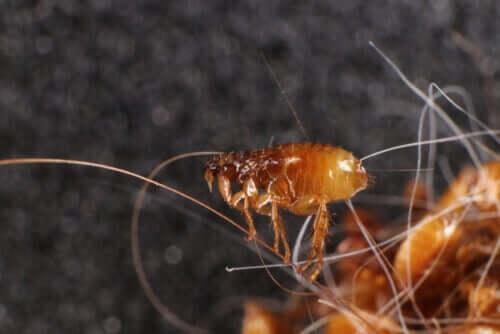 Vorbeugung gegen Parasiten: Warum ist sie bei Haustieren so wichtig?