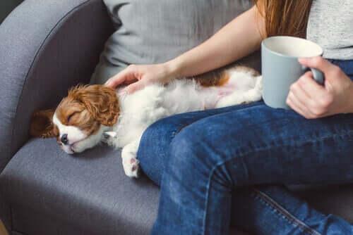 Gründe, warum ein Haustier bewusstlos werden kann