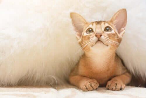 Angststörungen - verängstigte Katze