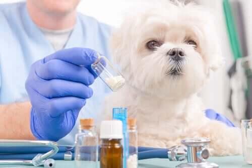 Dosierung von Medikamenten - kleiner Hund