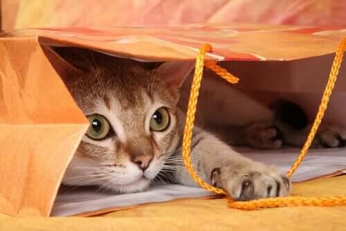 Angststörungen - Katze in einer Papiertüte