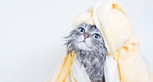 Feuchttücher - Katze nach Bad