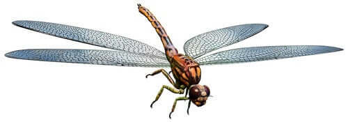 Rieseninsekten - Zeichnung