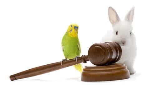 Tieranwalt - Hase und Wellensittich
