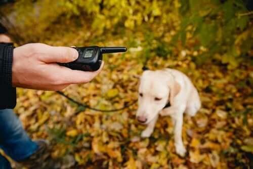 positive Hundeerziehung - Mann mit Hund im Wald
