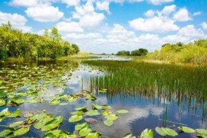 Die Pflege von Feuchtgebieten ist die Pflege der biologischen Vielfalt