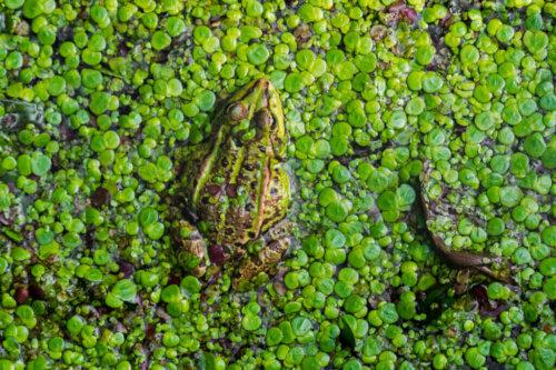 Feuchtgebiete gehen weltweit verloren: Gründe und Folgen