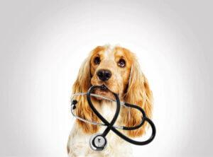 Während der Erstuntersuchung beurteilen Tierärzte das Atmungssystem, das Herz-Kreislauf-System, das Zentralnervensystem und das Harnsystem des Tieres